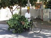 India 2011 112