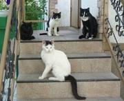 Ждут ужин.