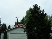 Природа Киркланда штат Вашингтон