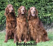 Bardonhill Group