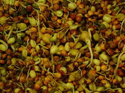 Intro to Sprouting
