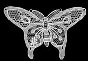 Halas butterfly