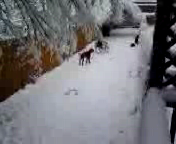 Christmas Blizzard 2006