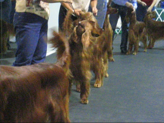 Irish Setter Club of Ft. Worth TX Specialty Show - September 23, 2007