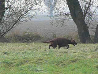 Danka running on the outskirts of Mohács
