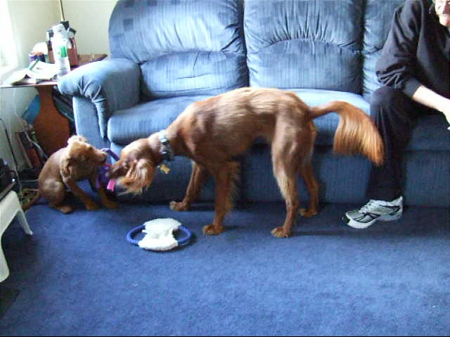 Duke teaching Abby to play