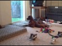3 Puppies Playing With momma Brea 11-6