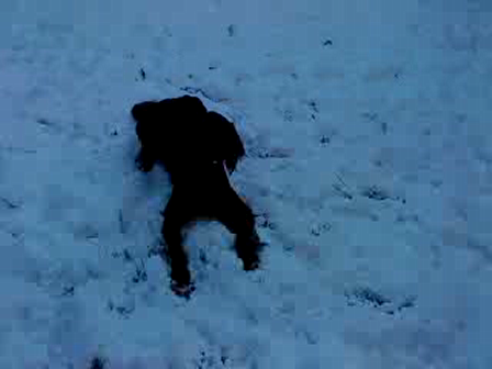 Rufus in the snow...