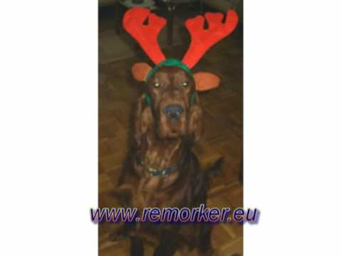 Remorker kennel irish setter wishes you Merry Christmas and happy holidays