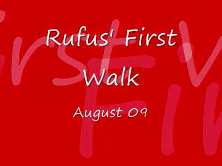 Rufus' first walk_version 2