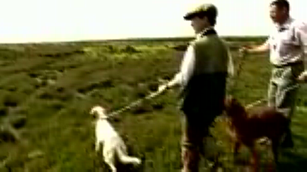 a short video of Jean Brown working her dogs:)