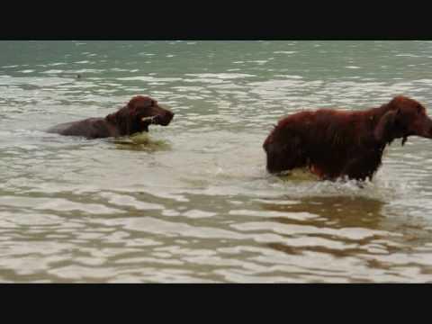 La Familia M'Eudail - at lake Bohinj