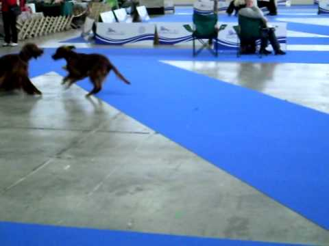 European Dog Show 2010 Celje - Conner playing.AVI