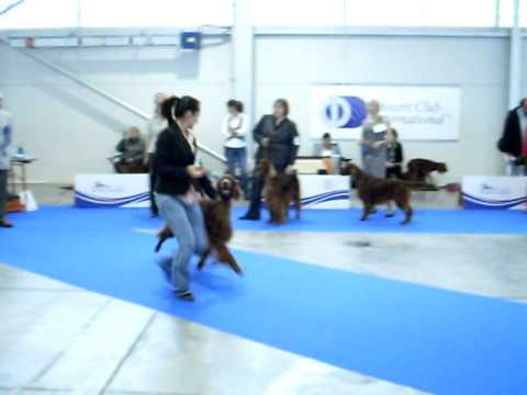 European Dog Show 2010 Celje - GIPSY WIND z Arislandu.AVI