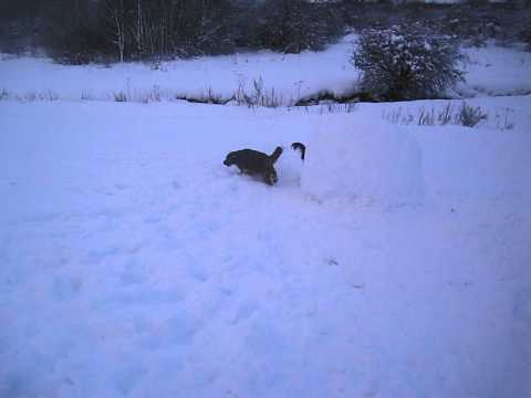 Snow Fun.....