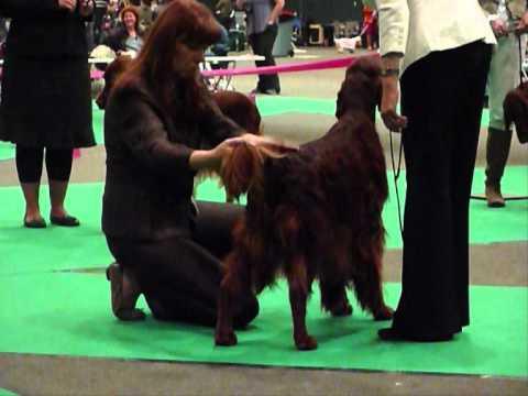 FCI Centenary European Dog Show 2011 NL - Houston of The Trav'Lin Star
