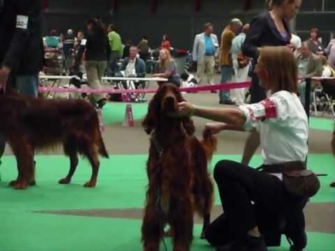 """FCI Centenary European Dog Show 2011 - Editions of You do Porto-Rio """"Luke"""""""