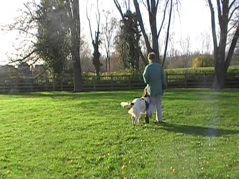 side stepping. Obedience lesson