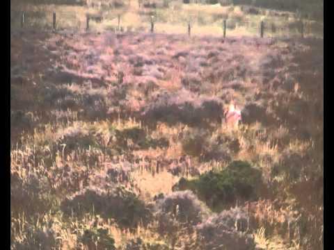 Ben setting grouse in December.MP4