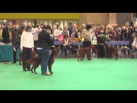 "Crufts 2013 - Riverwood Kumbayah ""Miss Penny"" 3th in Special Junior Bitch"