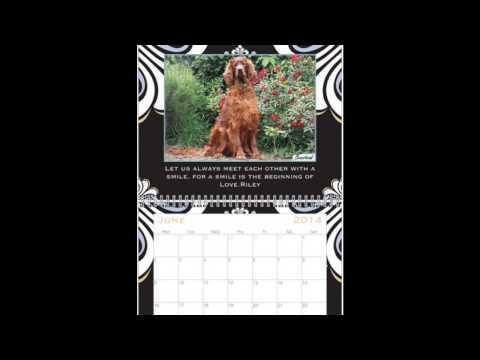 Irish setter photo's calendar 2014