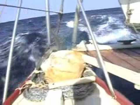 wharram Pahi 42 Fenua sailing.wmv