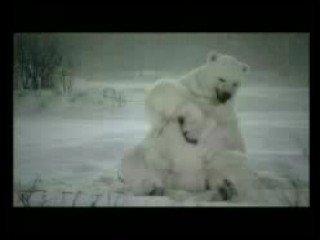 從北極熊我們看見溫室效應