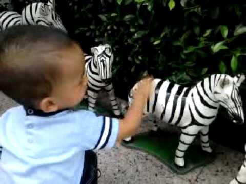 """Zebra"" Baby's first words"