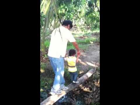 เดินข้ามท้องร่องสวนมะม่วง