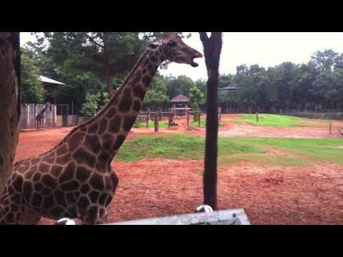 Korat Zoo by น้องฮานะ