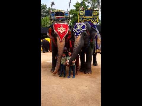 Dragon Mungon : มาลองเปิดประสบการณ์ใหม่กับช้างไทย
