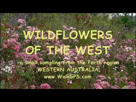 Wildflowers of the West - photos movie - WalkGPS - Oct. 2010