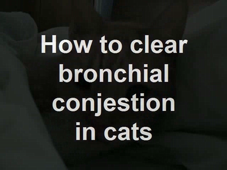 How to clear bronchial conjestion in cats