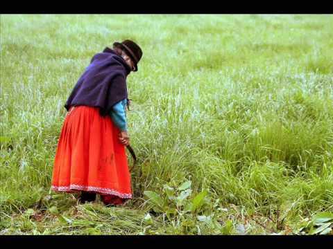 los campos verdes