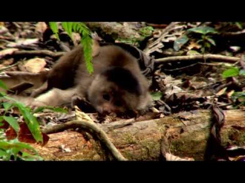 Amazonía Ecuatoriana