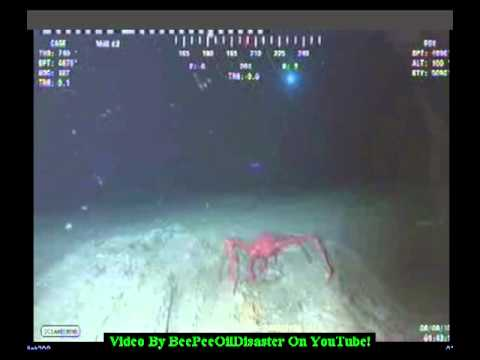 Huge Creature Attacks An R.O.V. In The Gulf Of Mexico!