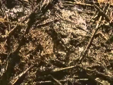 1-7-2011 - Oil still lingers in Plaquemines Parish