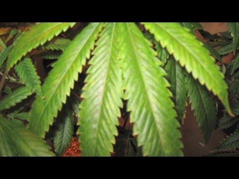 Medical marijuana now for sale in Washington, D.C.
