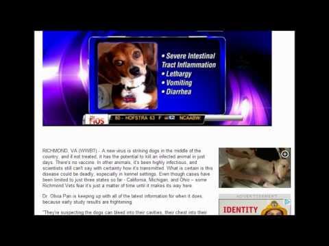Dangerous new virus killing dogs.