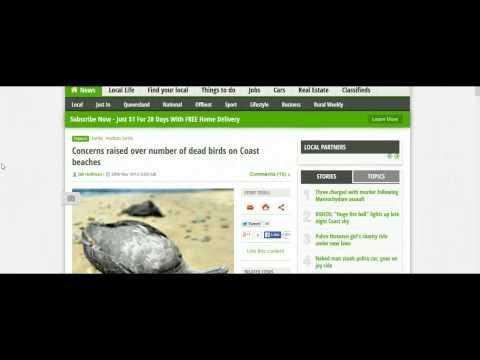 MASSIVE Bird Die Off from Mid Coast Queensland to New Zealand...5 Million! (1st Dec 2013)