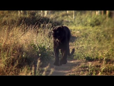 """The incredible story of how leopard Diabolo became Spirit - Anna Breytenbach, """"animal communicator""""."""