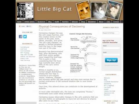 The Physical Consequences of Declawing Your Cat