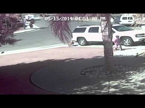 Cameras capture moment cat saves boy from dog attack