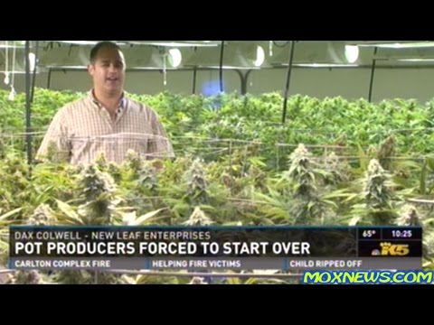 Recreational Marijuana Stores Continue To Sit EMPTY! Due To Overzealous Petty Tyrants In Washington!