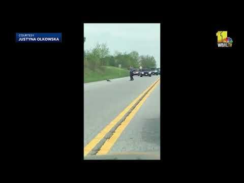 Residents upset after Md. deputy shoots groundhog blocking traffic