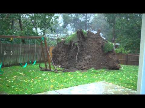 Hurricane Sandy Bring Down Tree Like A Monster Rising Up From Under The Earth