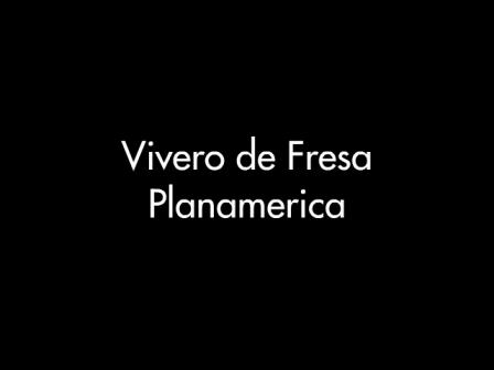 Día de Campo en vivero de fresa Planamerica