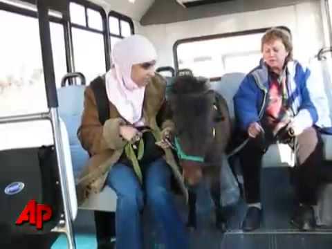 Utilización de un pony como lazarillo