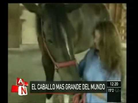 EL CABALLO MAS GRANDE DEL MUNDO.wmv