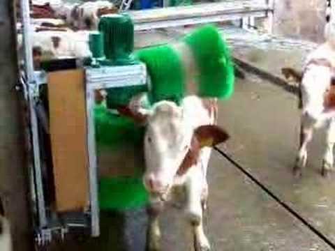 Masajeador de ganado